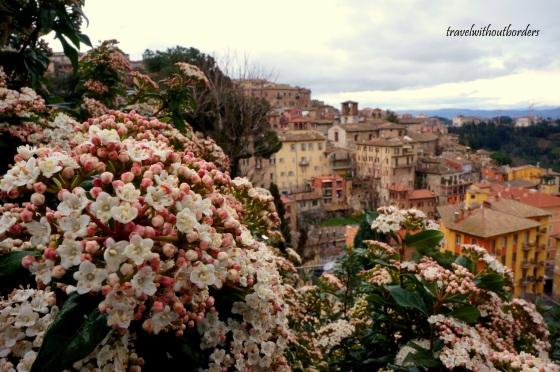Flowers + Perugia!