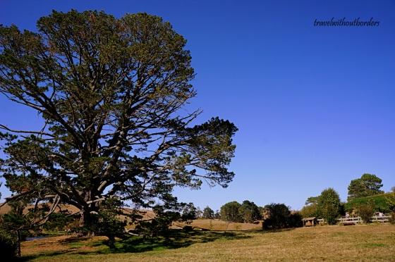 The Giant Tree!