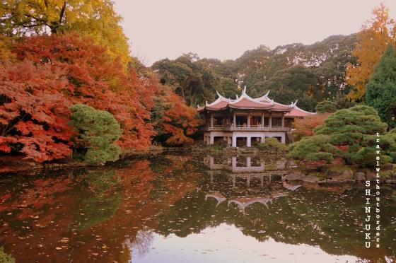 Shinjuku Gyoen National Garden!