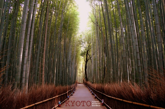 Balancing My Yin And Yang in Arashiyama Bamboo Forest!