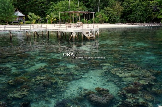Corals!