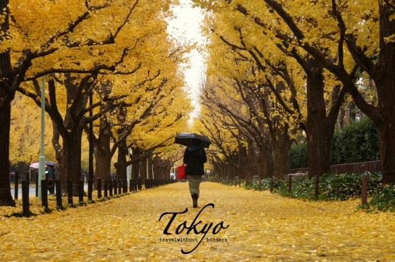 (5) Ginkgo Avenue, Tokyo, Japan